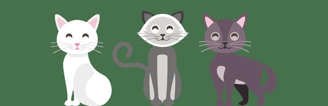 Bannière chat