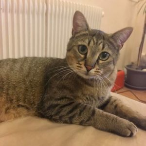 Chat Saphir Bordeaux
